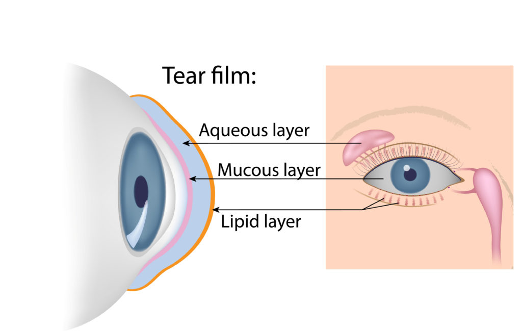 diagram showing eye glands and components of tear film