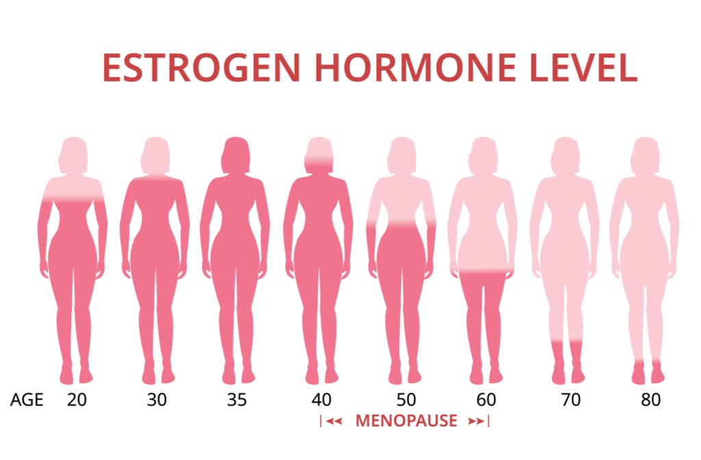 Diagram showing changes to estrogen levels as women age